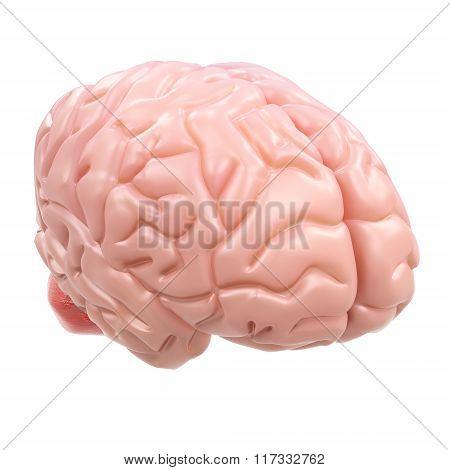 3D Detailed Brain