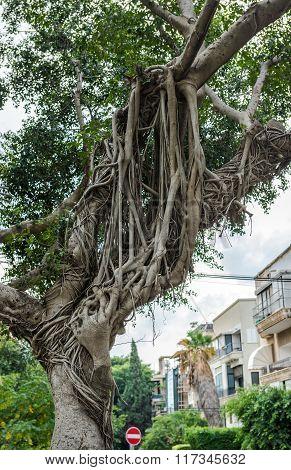 Tel Aviv Nature