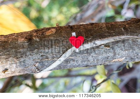 Love Sign On A Big Branch