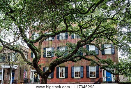 Red Brick House Behind Massive Oak