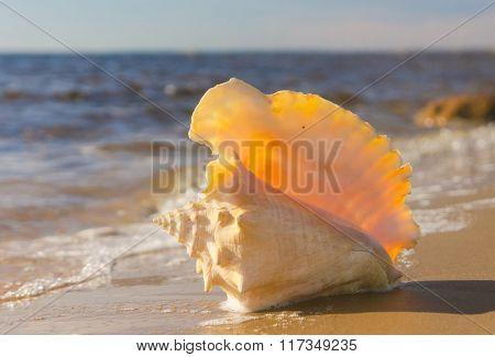 Beach Treasure Idyllic Image