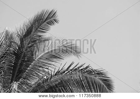 Palm tree, retro stylization, close-up