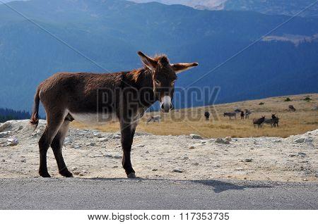Beautiful donkey on a road