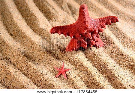 Two Sea Stars On The Sandy Beach