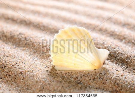 Sea Shells On The Sandy Beach