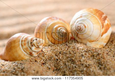 Bright sea shells on the sandy beach