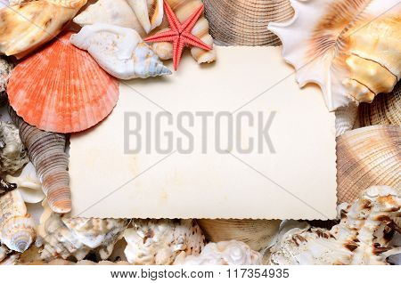 Blank postcard In various Sea Shell Frame