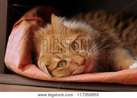 Stretched spiral cat
