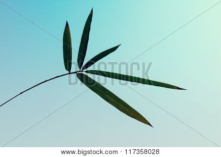 Silhouette Bamboo Leaf On Sky Background  - Vintage Style