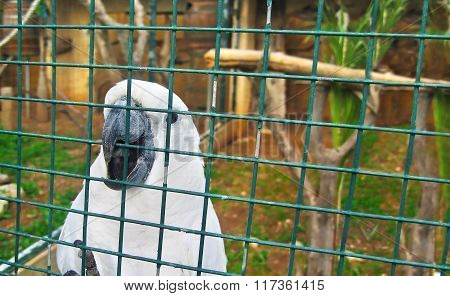 white parrot in the zoo