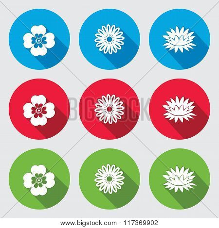 Flower set. Camomile, Chamomile, forget-me-not, lily, water-lily. Floral symbol. Round red, green, b