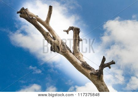 Old Snag On Sky And Cloud At Sunny Day.