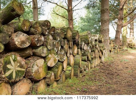 Logs stacked on a woodland path