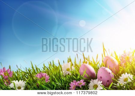 Easter eggs on green grass at sunny day