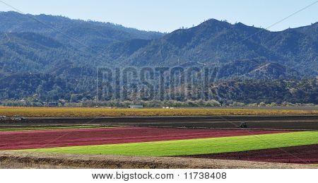 California Lettuce Fields