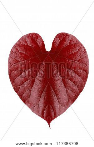 Red Leaf Heart Shape Isolated On White