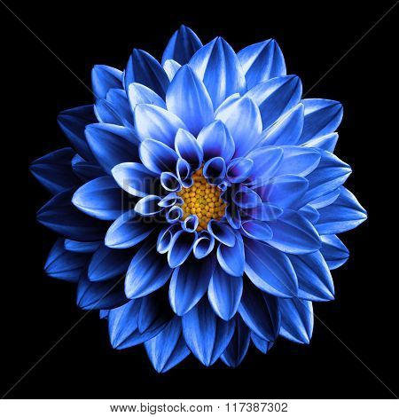 Surreal Dark Chrome Blue And White Flower Dahlia Macro Isolated On Black