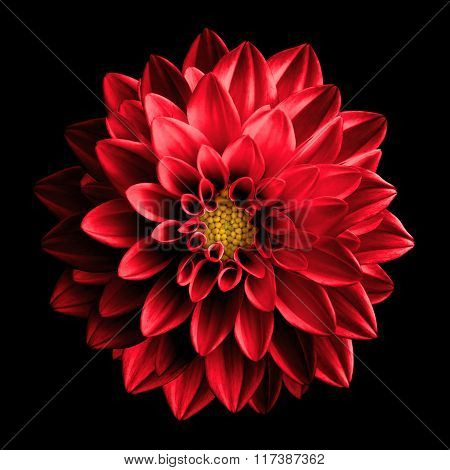 Surreal Dark Chrome Red Flower Dahlia Macro Isolated On Black