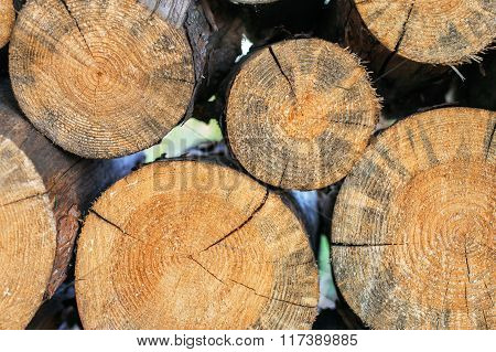 logs stacked in a woodpile closeup