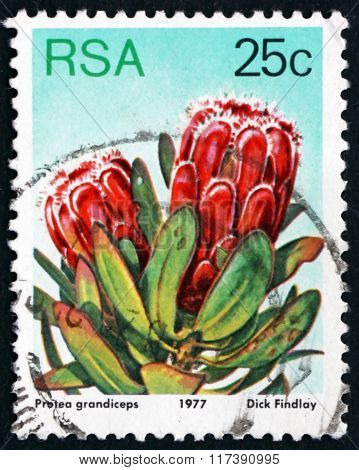 Postage Stamp South Africa 1977 Red Sugarbush, Flowering Plant