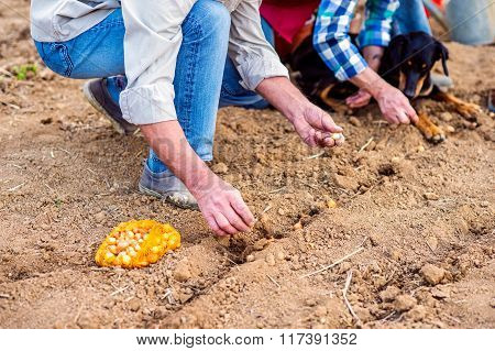 Close up of unrecognizable senior couple planting onions in row