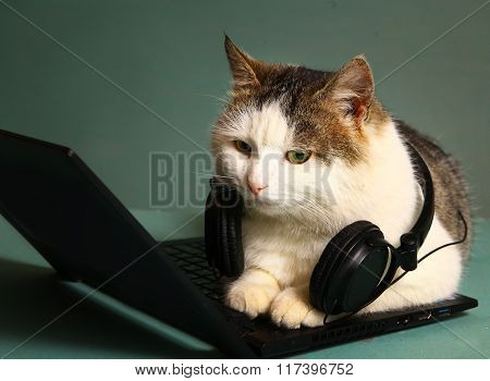 Funny Picture Of Cat Lay On Copmuter Laptop