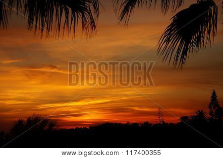 Reddish sunset sky with black silhouettes of tropical plants.