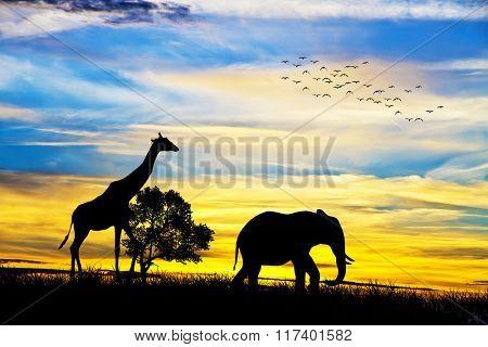 wild mammals released
