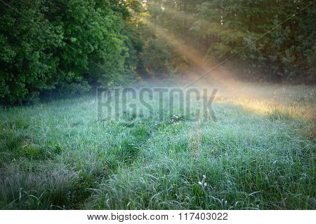 Morning sunbeams in fog on the forest meadow