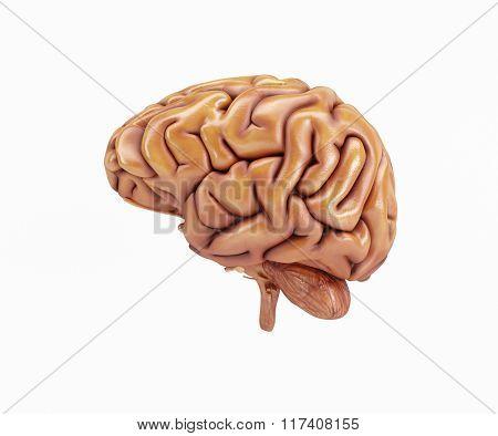 3D Render of a Human Brain