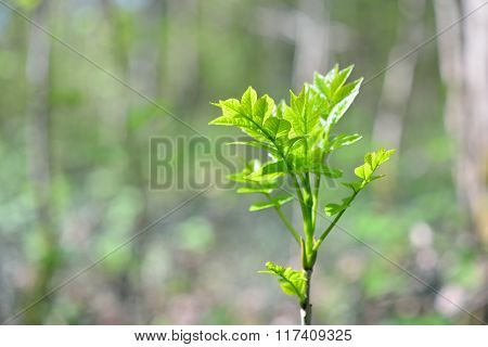 Young green leaves on a tree sprout in spring