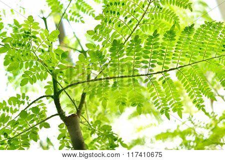 Green tropical fern leaves against bright light