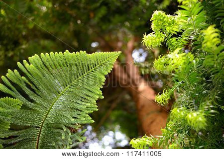 Exotic Pine Tree and a fern leaf