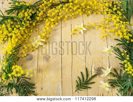 Mimosa In The International Women's Day