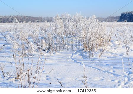 Dry plants covered with hoar-frost and snow in winter