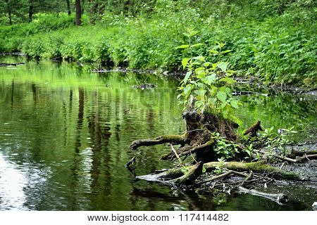 Green trees reflecting in calm river water in a forest