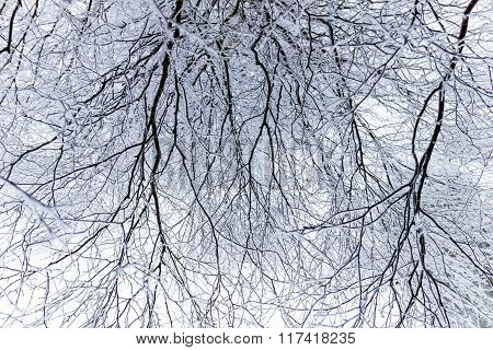 Soft Rime On Branches