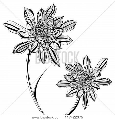 Aeonium Tree Floral In Black And White