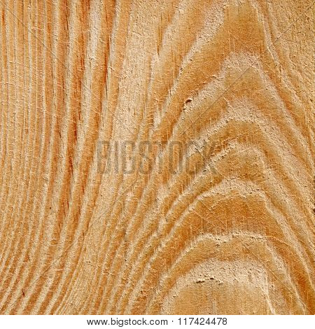 wood texture with growth rings