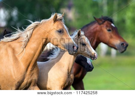 Horses running in field in summer