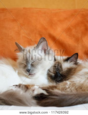 Two cute cats sleeping