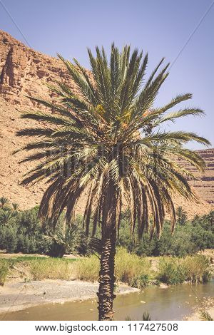 Vegetation And Water In The Oasis Of The Morocco