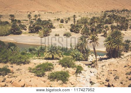 Wide View Of Cultivated Fields And Palms In Errachidia Morocco North Africa Africa, Deep Blue Sky