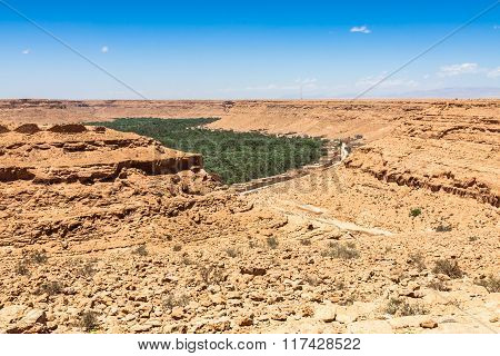 Cultivated Fields And Palms In Errachidia Morocco North Africa Africa