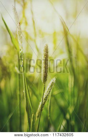Sunny Green Meadow