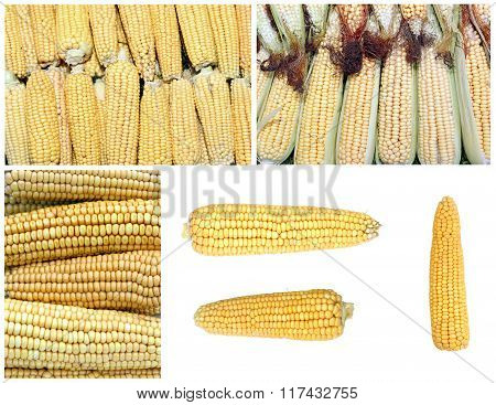 Backgrounds From Corn And Corn On The Cob