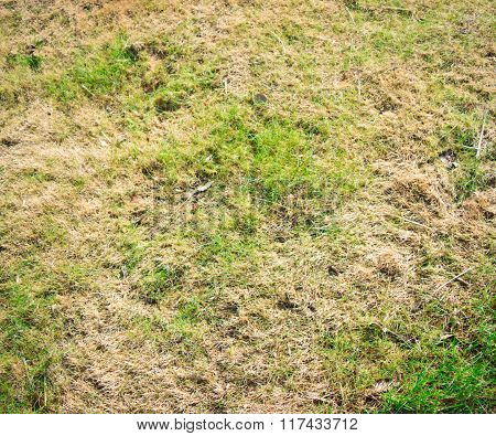 Faded Grass Texture