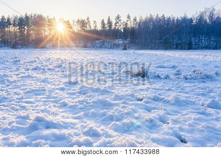 Grassland field at winter