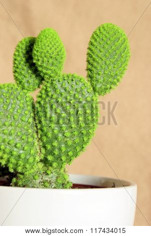 Potted Cactus Houseplant