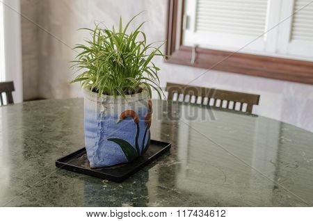 Decorative Grass In Flowerpot